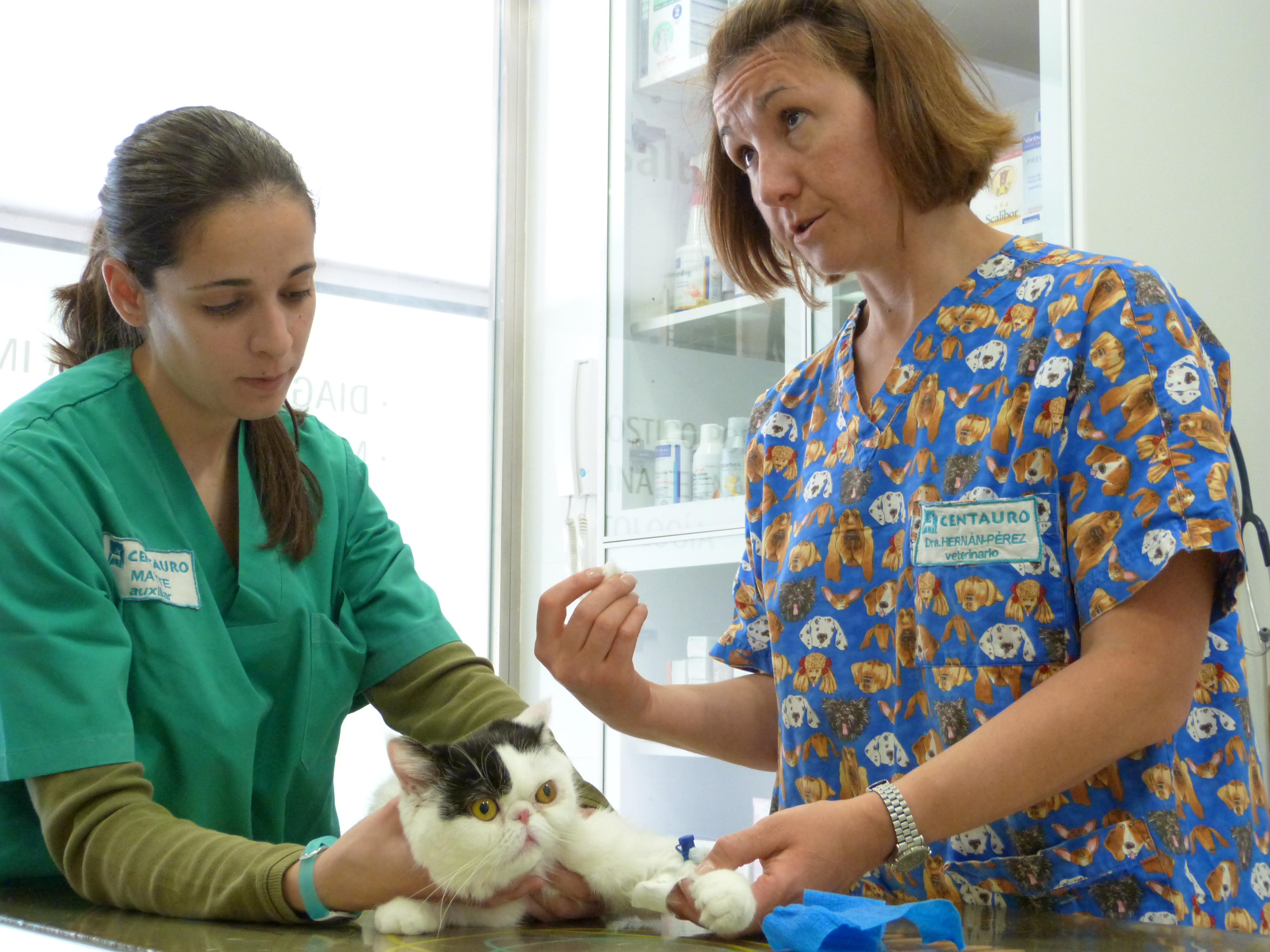La información al propietario es la base de la salud de la mascota